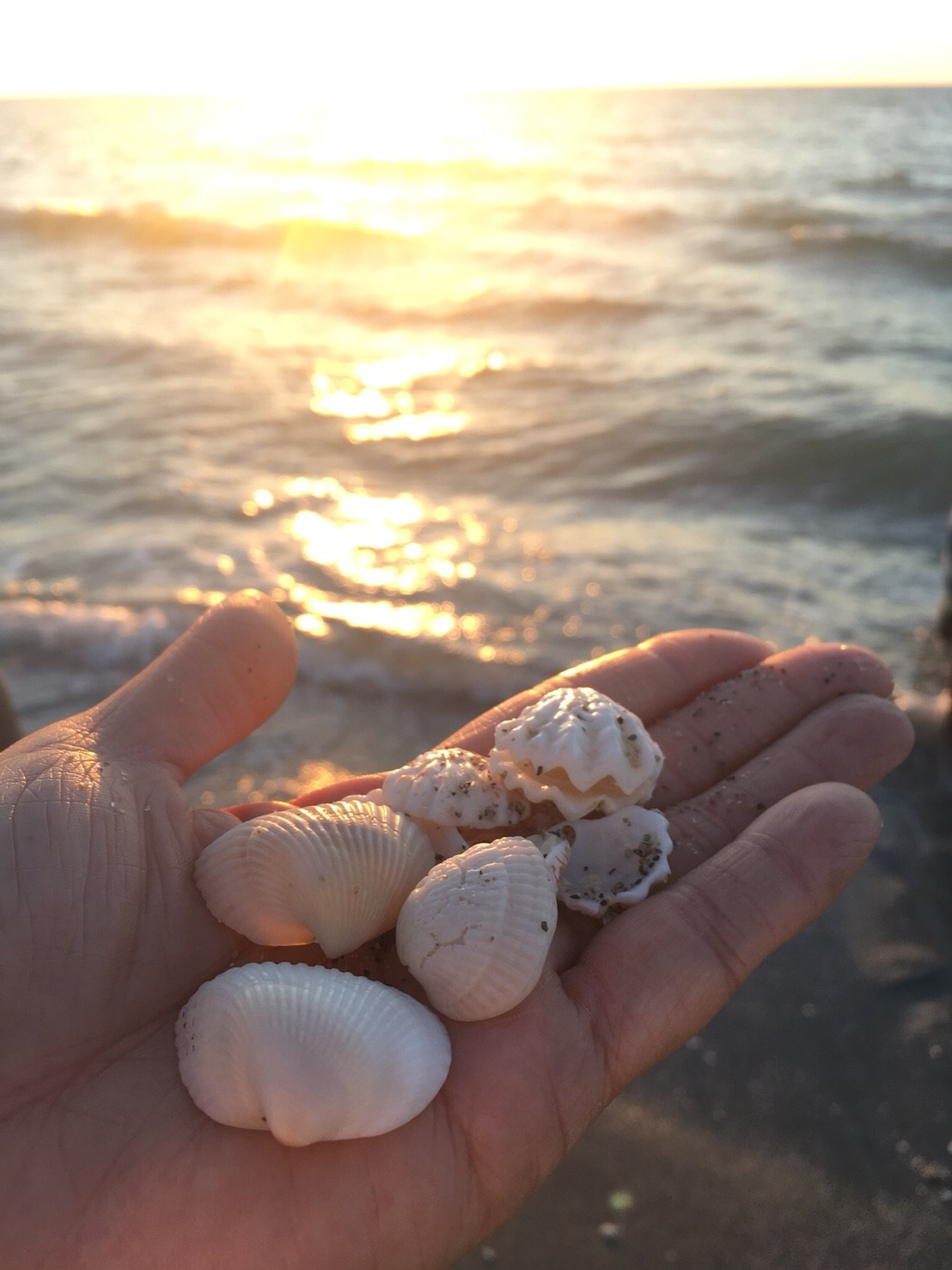フロリダ州にある世界三大シェルビーチを堪能